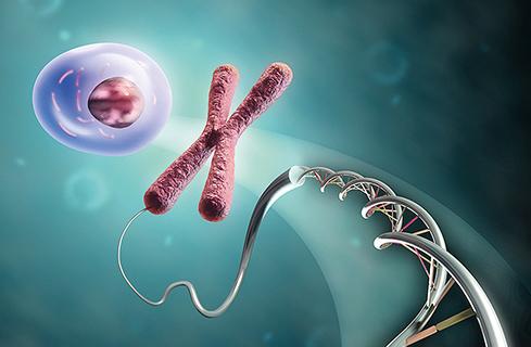 Kromoszóma vizsgálata
